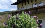 Recenze Hotel Lavendel