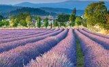 Provence - vůně levandule