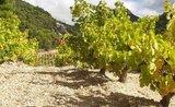Beaujolais a Burgundsko