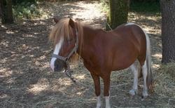 možnost jízdy na koni