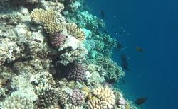 korály a rybičky