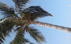 Kovová palma