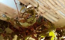 Poriadok po maliaroch na terase