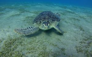 Jedna z mnoha želv