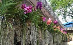 nádherné orchideje různých odstínů