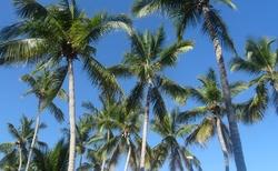 Krásné palmy
