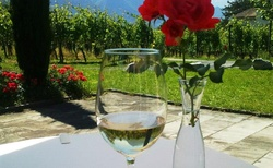 Na vinici