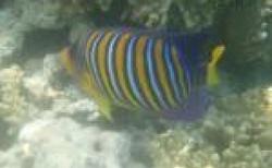 Egypt podmořský svět
