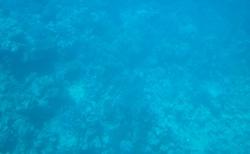 podmořský svět focený přes sklo v ponorce
