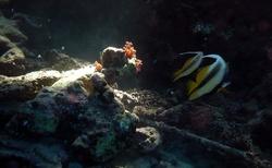 podmořský svět v Rudém moři
