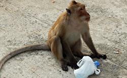 Opice jsou vidět dost často - pozor, kradou, škrábou