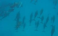 Hejno Delfínů