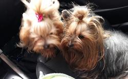 Naše holky v autě