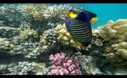 Pestrý život pod vodou
