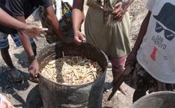 Andranovory - pálení kořalky