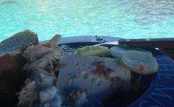 Obed na lodi christine, kastos