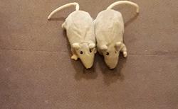Gyor - hotel Rába - psí hračky