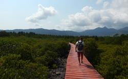 Chodníčkem skrz Mangrovy