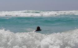 Trocha vln