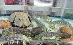 Krabi a ryby v aváriích v plovoucí vesnici