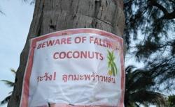 Pozor na padající kokosy