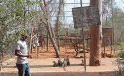 Ifaty - Národní rezervace Reniala - adaptace lemurů