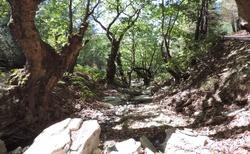 Thassos - Jeepama do hor - u Apostoloi_Falls