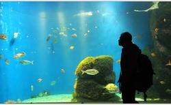 Relax u vody. Nebo pod vodou?