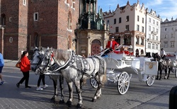 Krakov - Rynek glowny - kostel Nanebevzetí panny Marie - koňský kočár