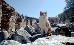 Čičí v Efesu