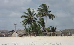 palmy u Indického oceánu