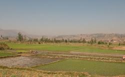 Okolí Antsirabe - rýžová políčka