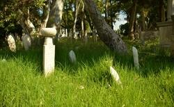 Turecký hřbitov