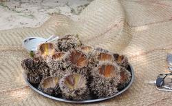 Ifaty - Villa Maroloko - mořští ježci před konzumací