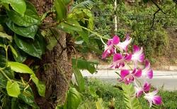 Orchidej v přírodě