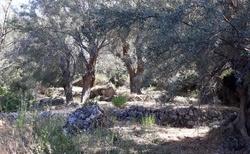 Kerassias prameny - cesta pramenů