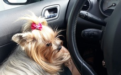 Cherry mi pomáhá řídit (na parkovišti)