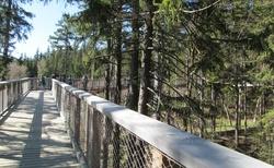 Stezka korunami stromů-Janské Lázně