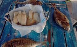 Čerstvé ryby přímo z moře