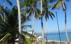Karibik je nádherný tak jako fauna
