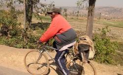 Okolí Antsirabe - převoz selete na kole