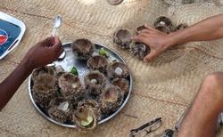 Ifaty - Villa Maroloko - mořští ježci po konzumaci