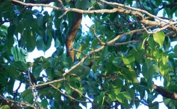 Najdi papouška