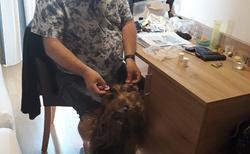 Golling - Gasthof Goldene Traube - psí odměna za hlídání